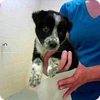 Adopt A Pet :: A275701 - Conroe, TX
