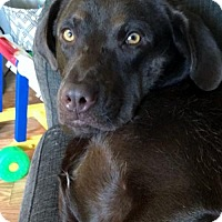 Adopt A Pet :: Ranger - Grafton, WI
