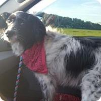 Adopt A Pet :: Amidala - Columbus, IN