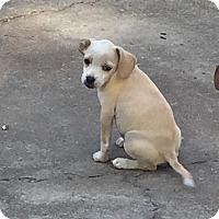 Adopt A Pet :: Lola - Albemarle, NC