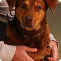 Adopt A Pet :: Red - Lafayette, IN