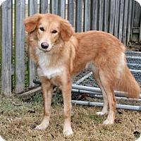 Adopt A Pet :: LADY NOEL - Portland, ME