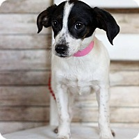 Adopt A Pet :: Lyra - Waldorf, MD