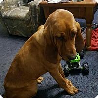 Adopt A Pet :: Piper - Ellaville, GA