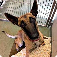 Adopt A Pet :: JULIEN - Santa Fe, NM