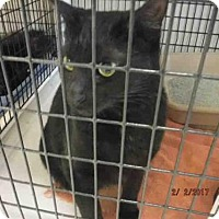 Adopt A Pet :: A568773 - Oroville, CA