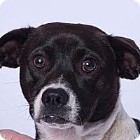 Adopt A Pet :: Lt. Dann - Vidor, TX