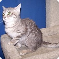 Adopt A Pet :: Merida - Colorado Springs, CO