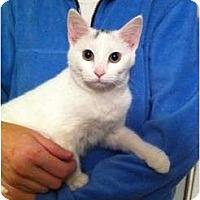 Adopt A Pet :: Missey - Simpsonville, SC