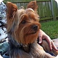 Adopt A Pet :: Angus - Gulfport, FL