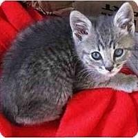 Adopt A Pet :: Mouse - Irvine, CA