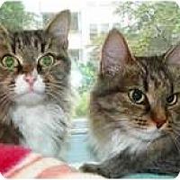 Adopt A Pet :: SweetPea & Borisina - Alexandria, VA