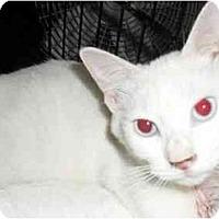 Adopt A Pet :: Molly - Jacksonville, FL