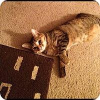 Adopt A Pet :: *Cat1 - Winder, GA