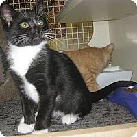 Adopt A Pet :: Calliope - Dallas, TX