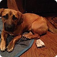 Adopt A Pet :: Finn - Russellville, KY