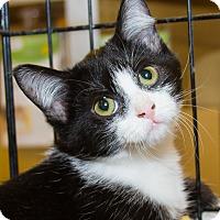 Adopt A Pet :: Arabella - Irvine, CA