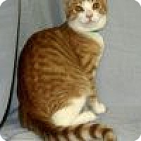 Adopt A Pet :: Kingsley - Powell, OH
