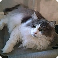 Adopt A Pet :: Mocha - Geneseo, IL