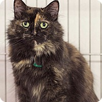 Adopt A Pet :: Cassi - Port Washington, NY