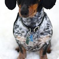 Adopt A Pet :: Snippet - Humble, TX