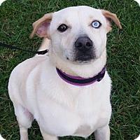 Adopt A Pet :: Oliver - Rohnert Park, CA