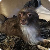 Adopt A Pet :: Taylor - Brea, CA