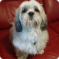 Adopt A Pet :: Joey - Lawrenceville, GA