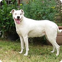 Adopt A Pet :: CoCo - Los Angeles, CA