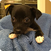 Adopt A Pet :: Sprout (LR) - Windham, NH