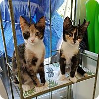 Adopt A Pet :: Gidget - Berkeley Hts, NJ