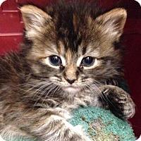 Adopt A Pet :: DIME - Lakewood, CA