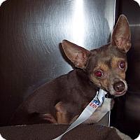 Adopt A Pet :: Mojo - Olivet, MI