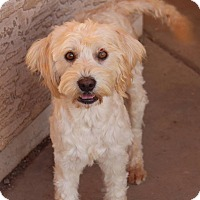Adopt A Pet :: Happy - Phoenix, AZ
