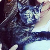 Adopt A Pet :: Matilda - Columbus, OH