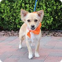 Adopt A Pet :: MADRE - Las Vegas, NV