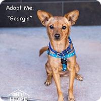 Adopt A Pet :: Georgia - Valencia, CA