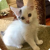 Adopt A Pet :: Kizzy - Southington, CT