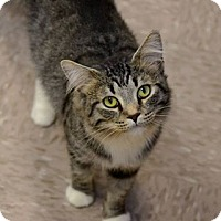 Adopt A Pet :: Mc'Cracken - Byron Center, MI