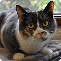 Adopt A Pet :: Josie - Portland, OR