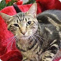 Adopt A Pet :: Albert - Greensboro, NC