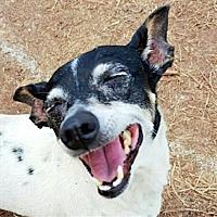 Adopt A Pet :: Penny (LA) - Baton Rouge, LA