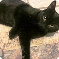 Adopt A Pet :: Chuck - Vancouver, BC