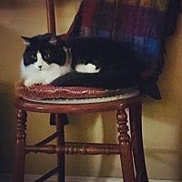 Adopt A Pet :: Lily-12570 - Richardson, TX