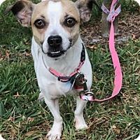 Adopt A Pet :: Calypso - Davie, FL