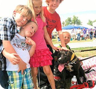 American Staffordshire Terrier Mix Dog for adoption in Scottsdale, Arizona - Lyla (courtesy post)