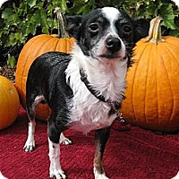 Adopt A Pet :: Balloo - Elk Grove, CA