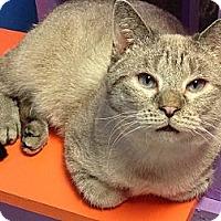 Adopt A Pet :: Linus - Topeka, KS
