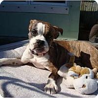 Adopt A Pet :: Maggie Mae - Fort Lauderdale, FL