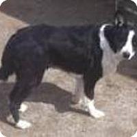 Adopt A Pet :: Maggie May - Phelan, CA